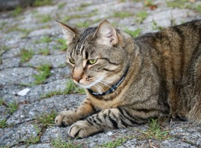 Air Halsband für Katzen und Hunde