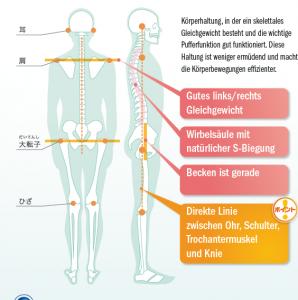 Skelettales Gleichgewicht